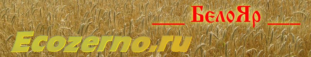 Экологически чистая цельнозерновая ржаная мука, а также цельнозерновая пшеничная и полбяная мука.                                      Выращенные без химии: рожь, пшеница, полба и голозерный овес для проращивания